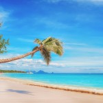 Caribbean beach with palm tree over the sand